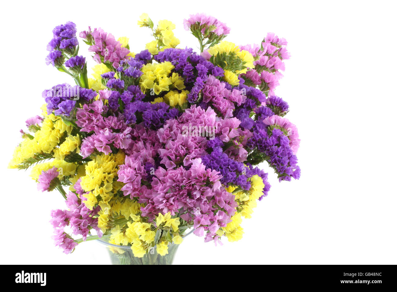 Pink  purple  yellow Statice flowers bouquet on white background     Pink  purple  yellow Statice flowers bouquet on white background