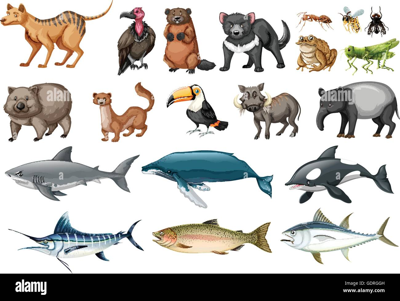Set Of Different Types Of Wild Animals Illustration Stock