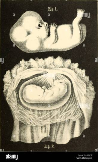 the science and art of midwifery     Array   the science and art of midwifery 1897 stock photo 114602922  alamy rh alamy com