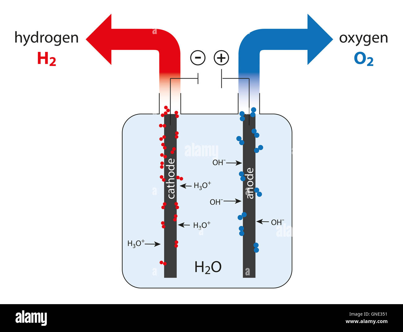 Electrolysis Cell Of Water To Produce Hydrogen And Oxygen