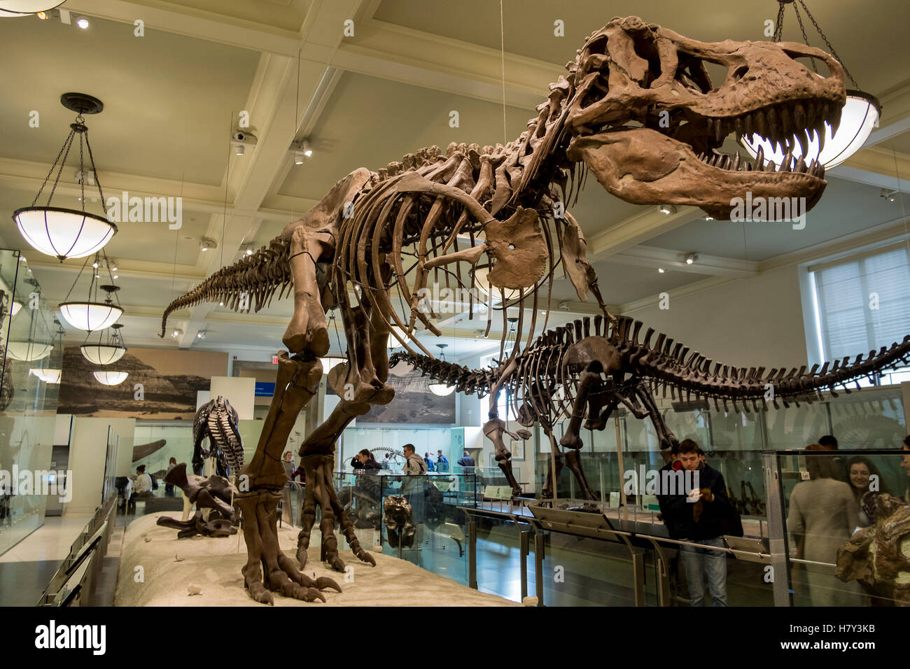T Rex Dinosaur Skeleton In The New York Museum Of Natural