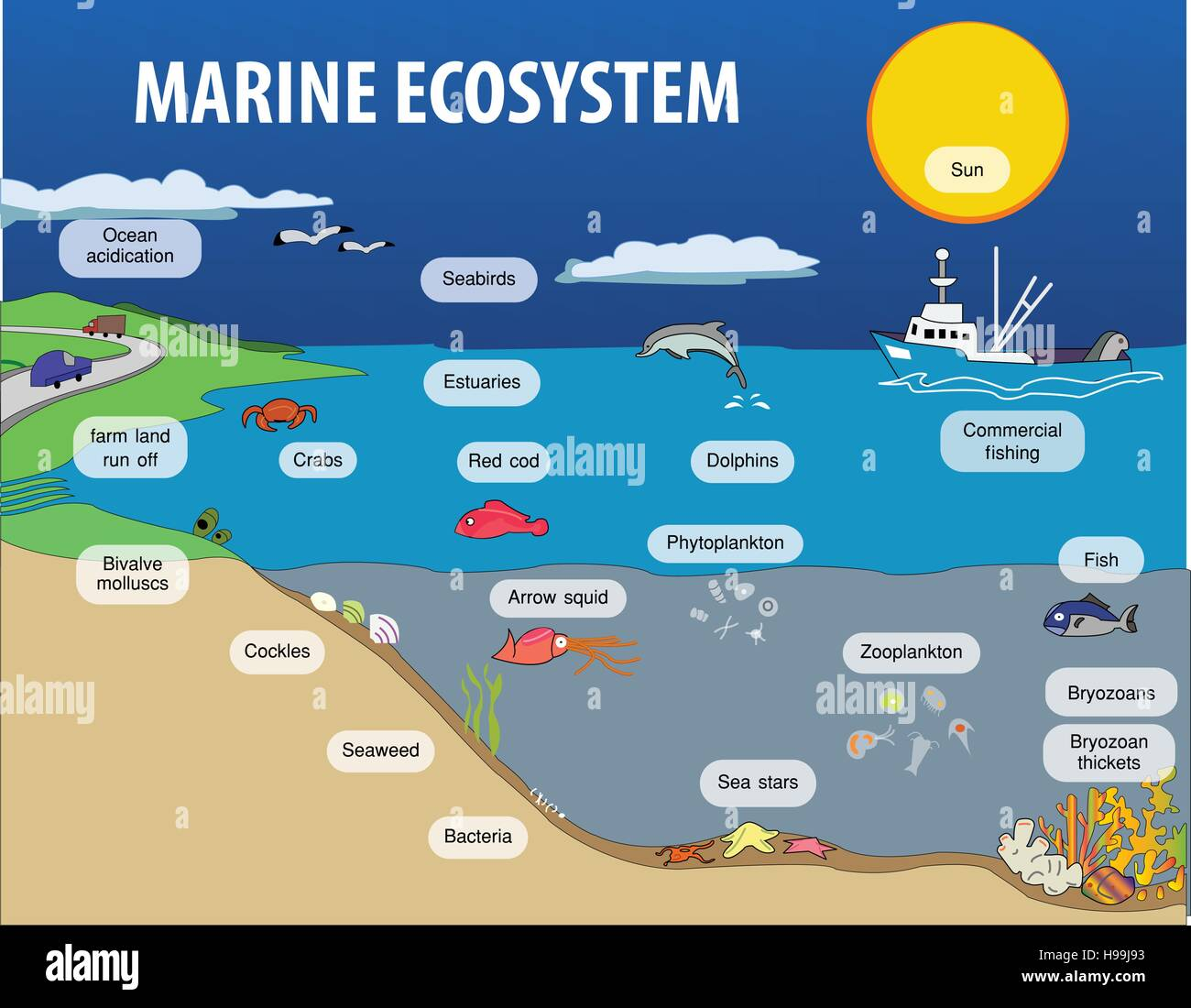 Vector Illustration Of Marine Eosystem Stock Vector Art