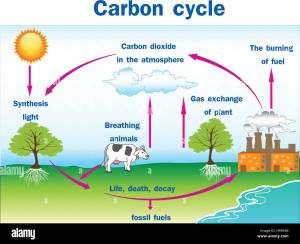 Vector illustration of Carbon cycle Stock Vector Art