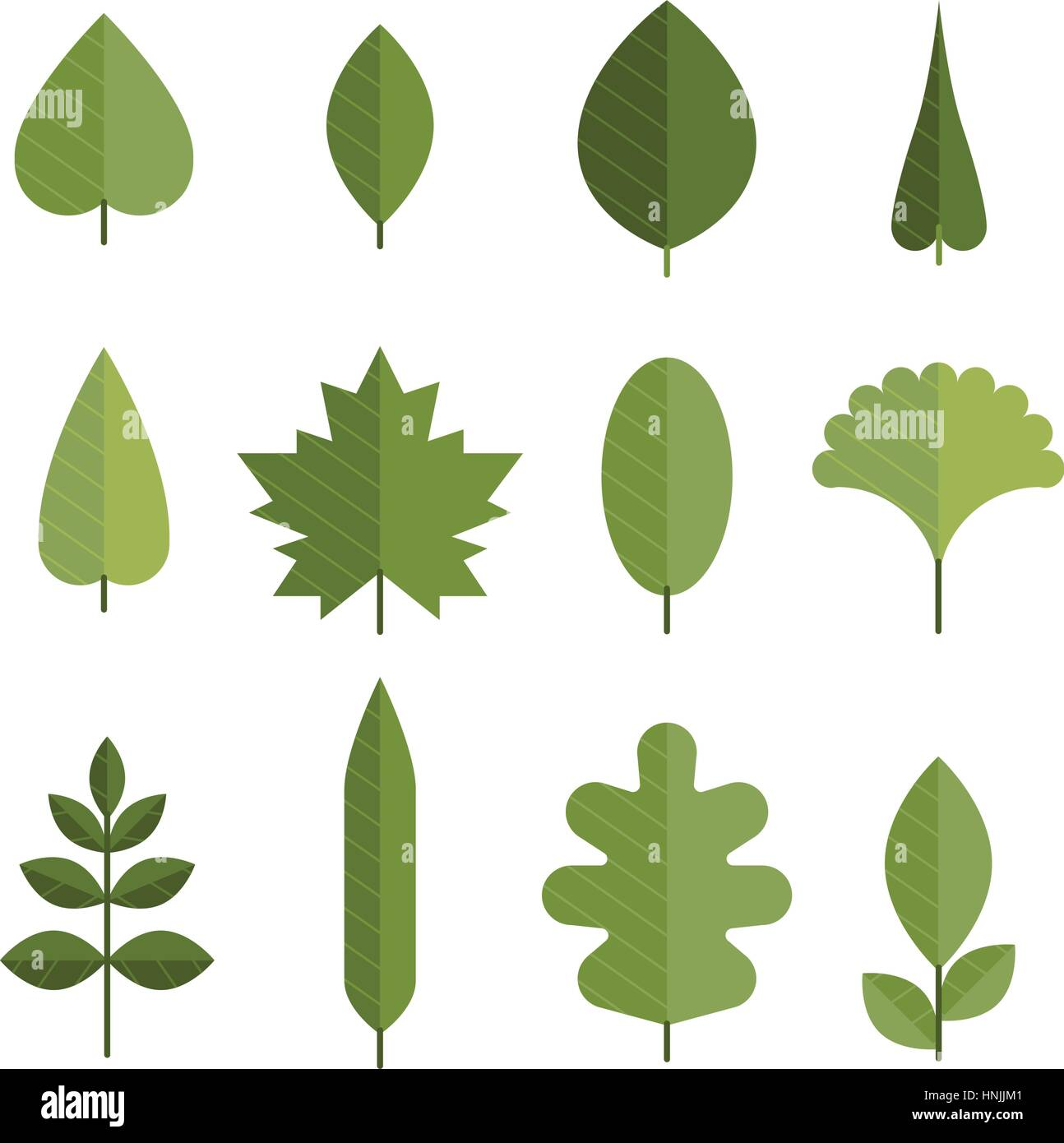 Set Of Flat Green Leaves Different Types Of Young Leaves