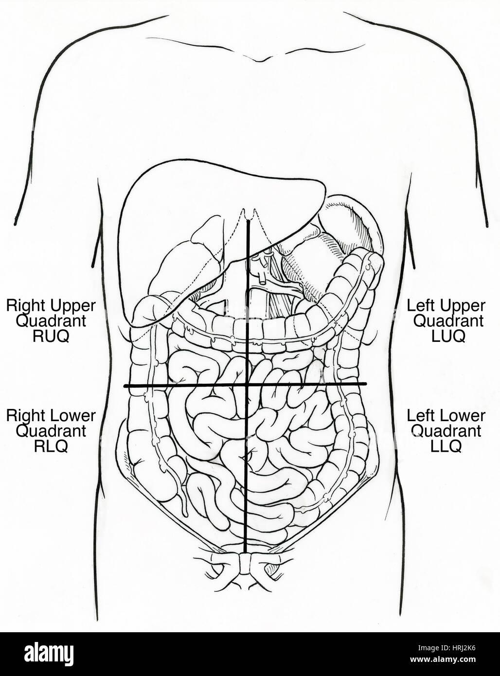 Illustration Of Abdominal Quadrants Stock Photo