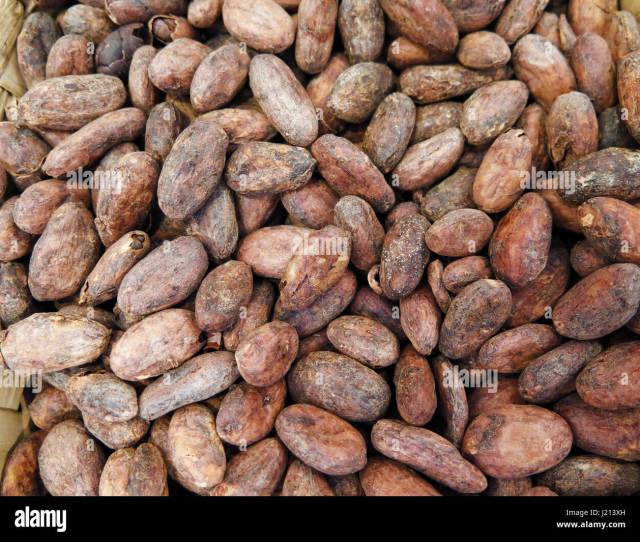 Raw Roasted Cocoa Beans Background