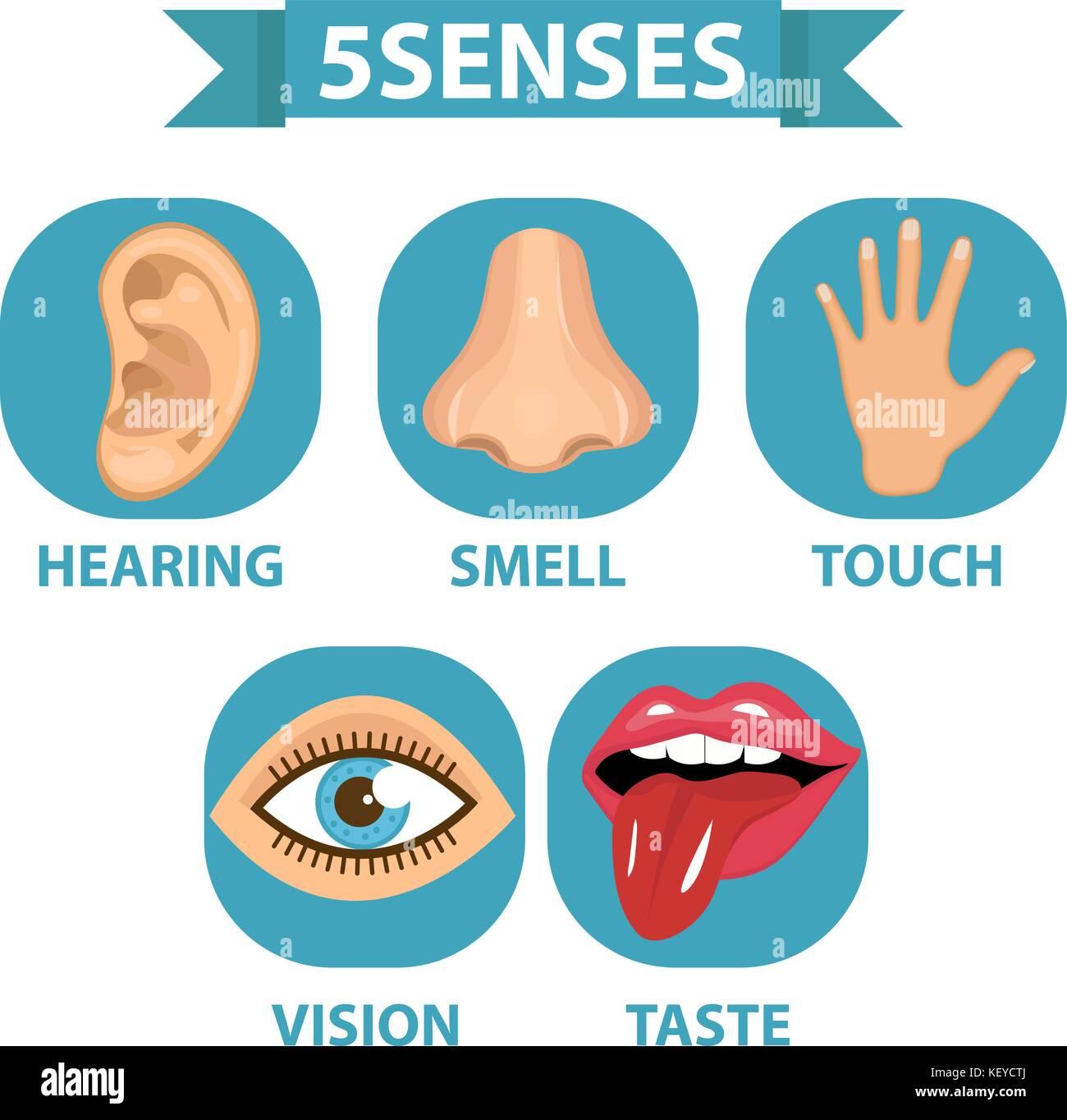 Five Senses Illustration High Resolution Stock Photography