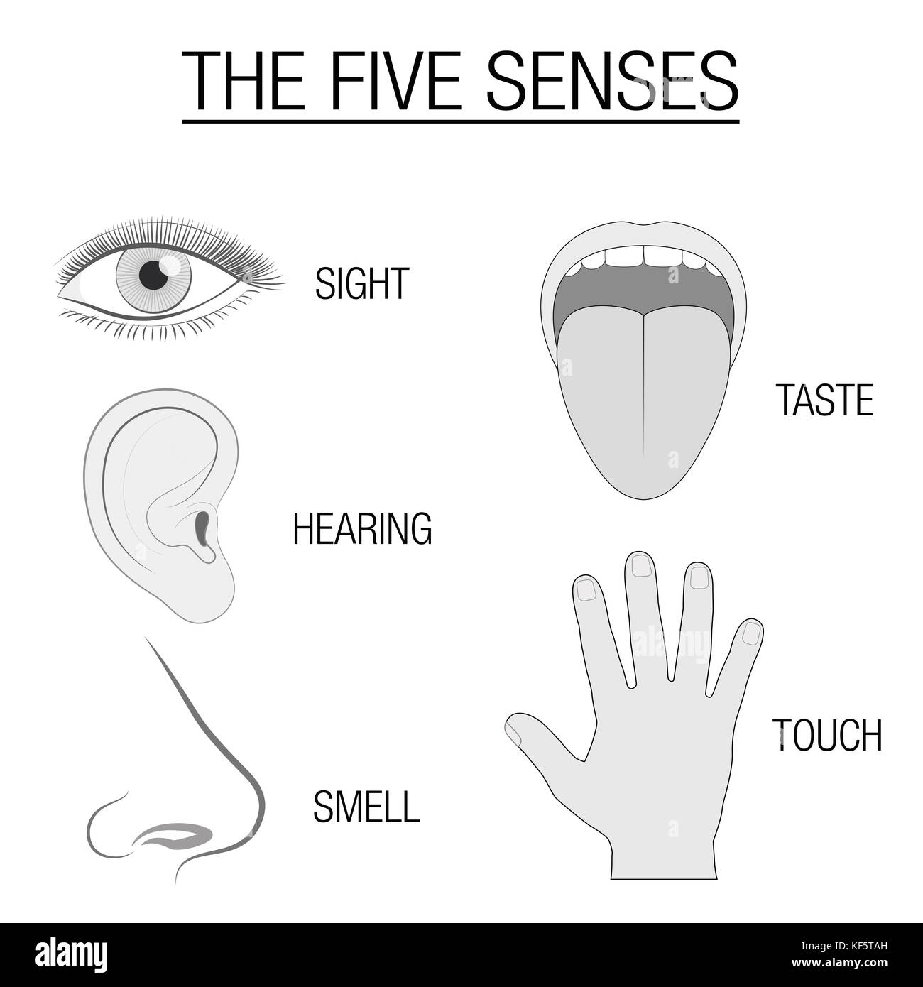 Five Senses Illustration Stock Photos Amp Five Senses