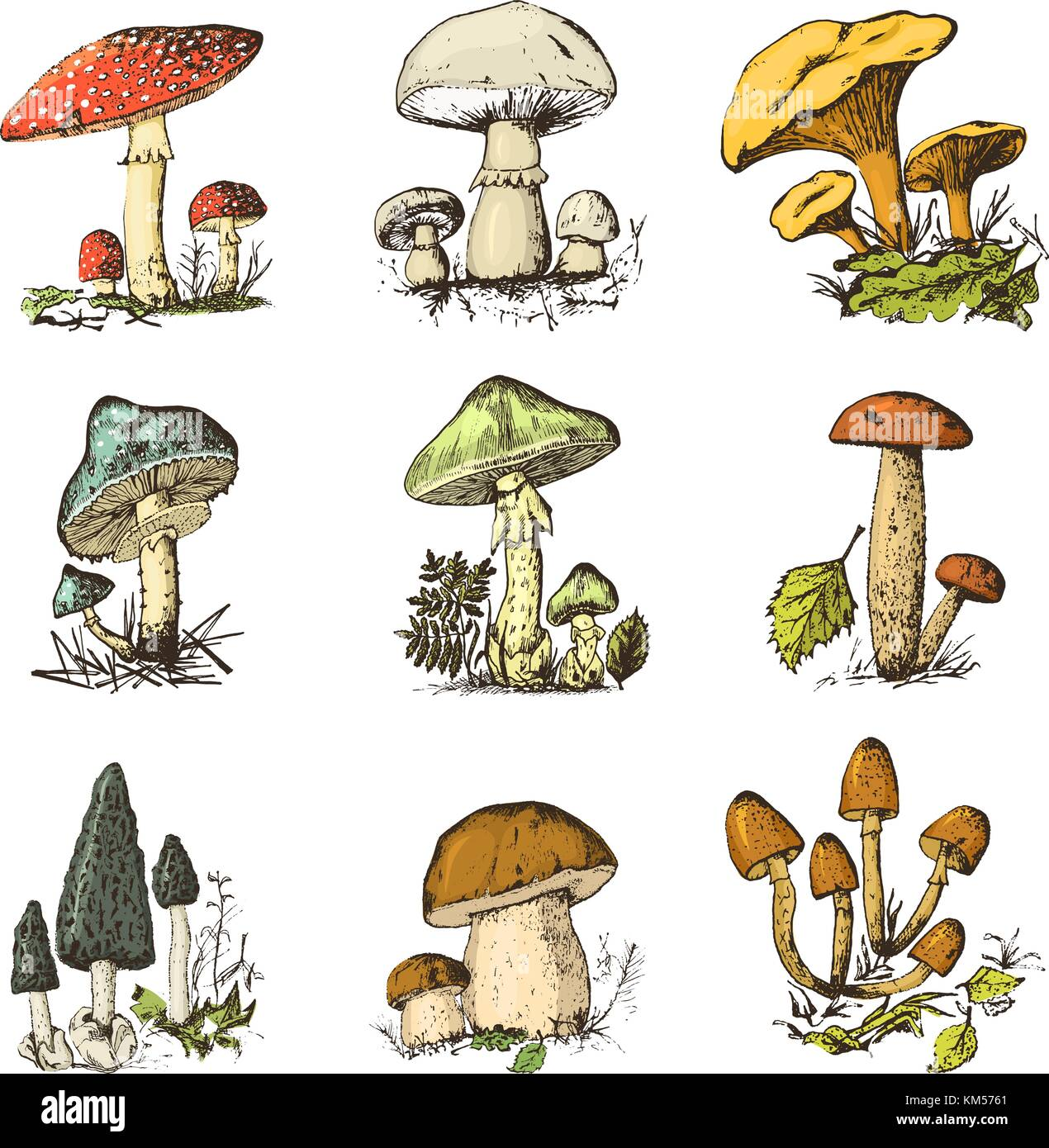 Mushroom Illustration Drawing Engraving Line Stock Photos