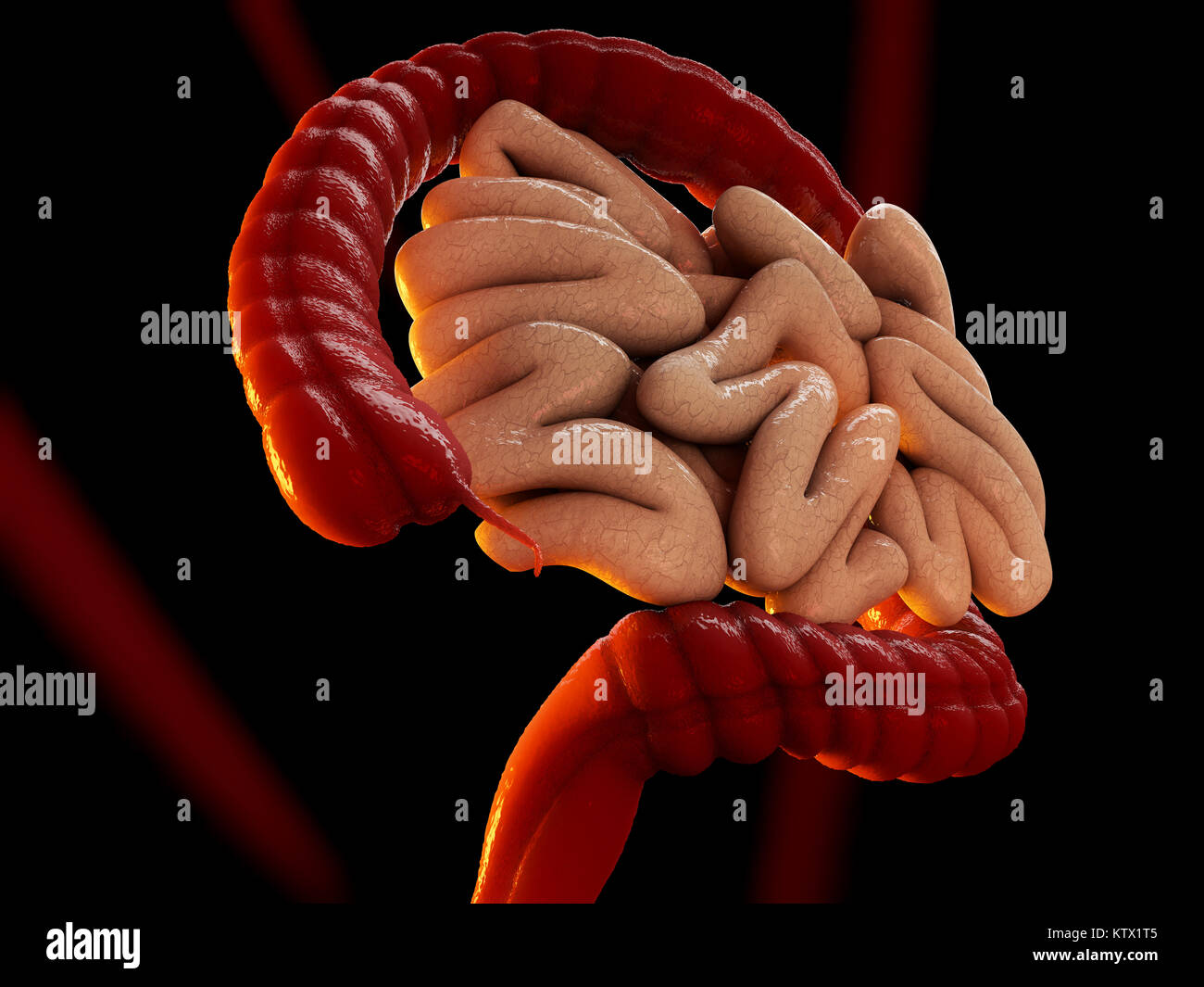 large intestine model » [HD Images] Wallpaper For Downloads | Easy ...