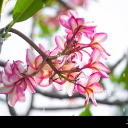 Names Of Spring Flowers In Bangladesh Gardening Flower And Vegetables