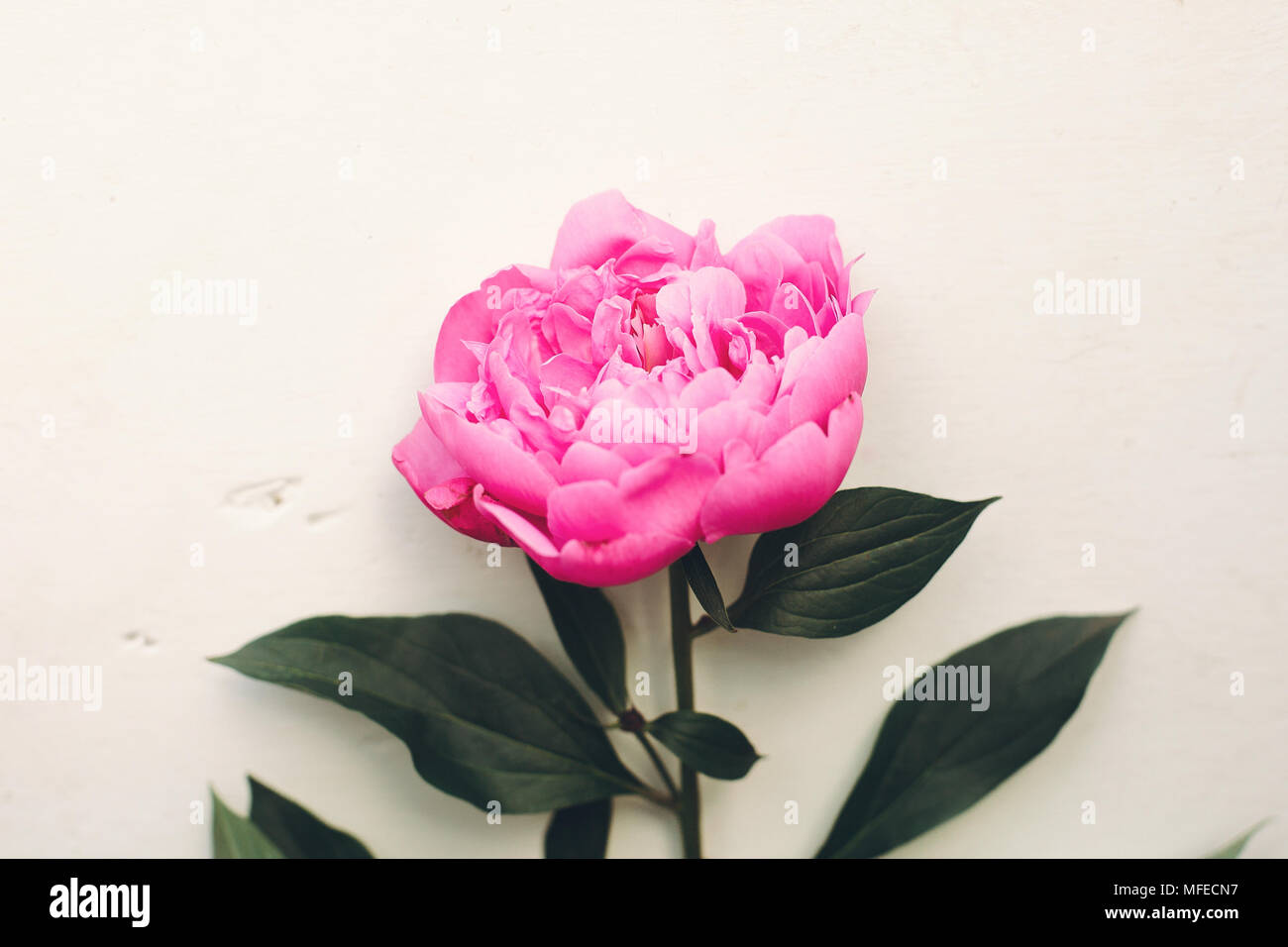 Pink Flower Aesthetic Wallpaper High Resolution Stock Photography And Images Alamy
