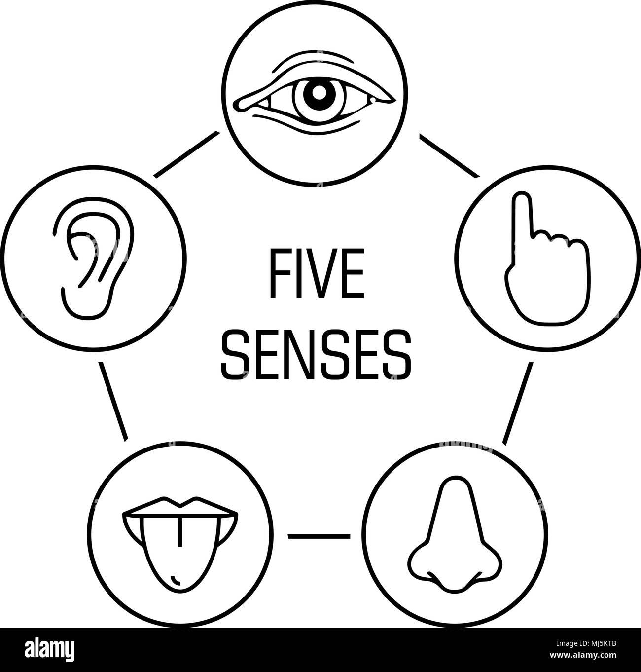 Five Senses Illustration Stock Photos Amp Five Senses