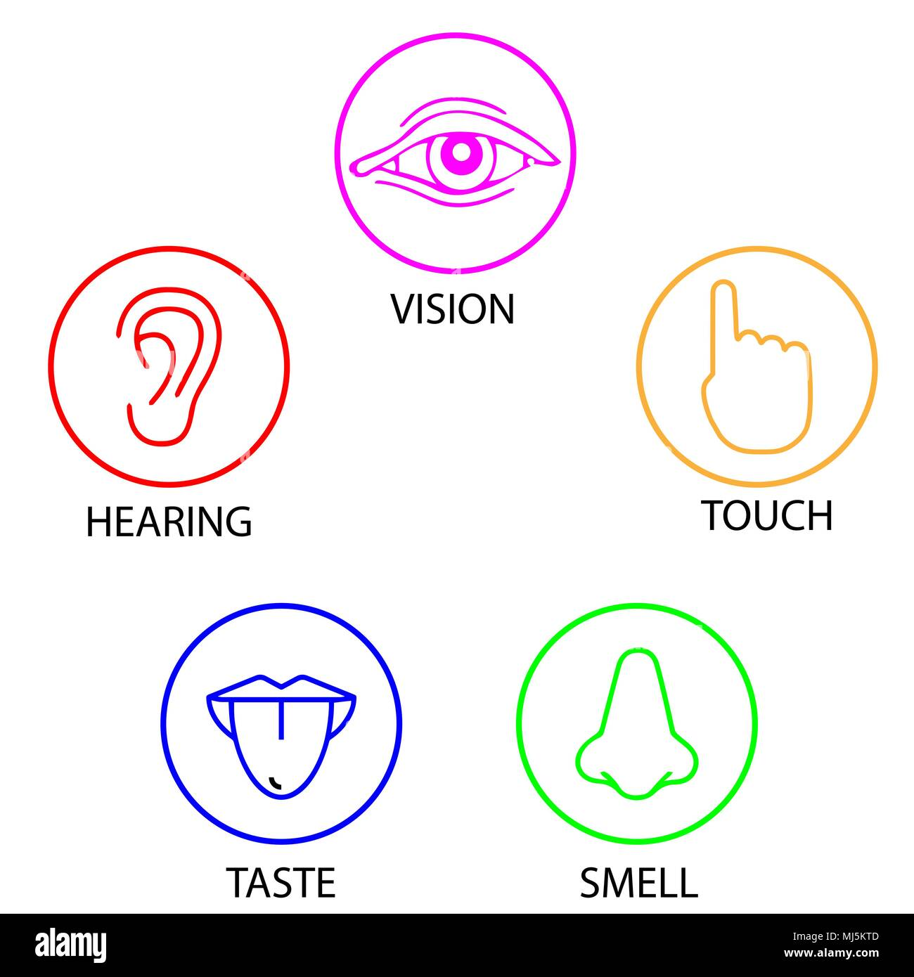 Hearing Smell Senses Stock Photos Amp Hearing Smell Senses