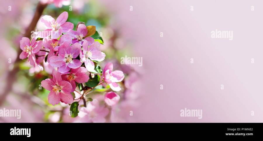 Fruit And Flowers Hawaiian Stock Photos   Fruit And Flowers Hawaiian     Hawaiian style floral background  Blossoming pink petals flowers close up   Fruit tree branch
