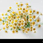 Macro Photography Of Little Daisy Flowers Bouquet Over White Soft Focus Top View Close Up Composition Stock Photo Alamy