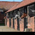 Horse Stable Uk High Resolution Stock Photography And Images Alamy