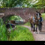 Grand Western Horse Boat High Resolution Stock Photography And Images Alamy