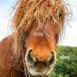 Funny Horse High Resolution Stock Photography And Images Alamy