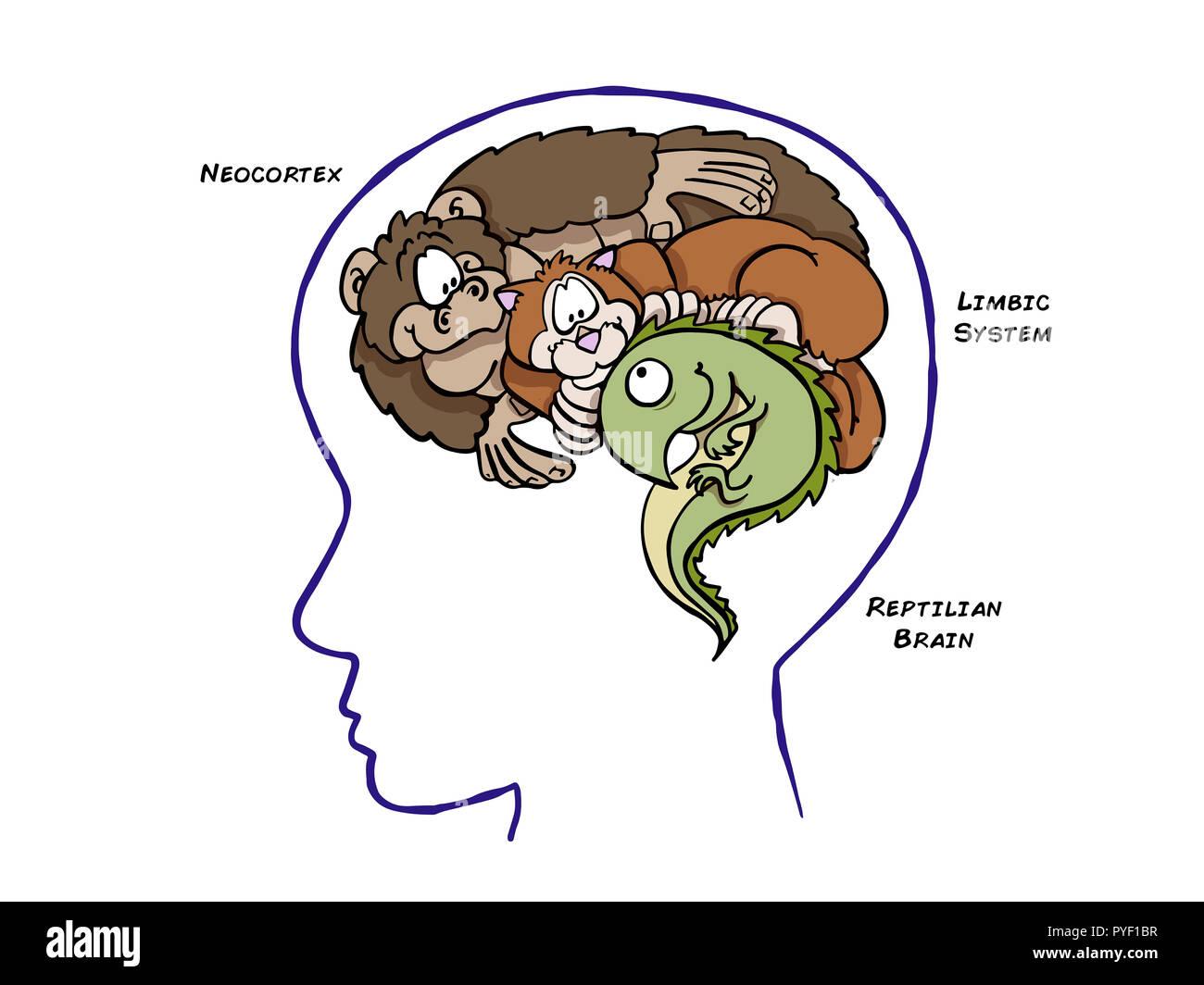 Triune Brain Theory Stock Photo