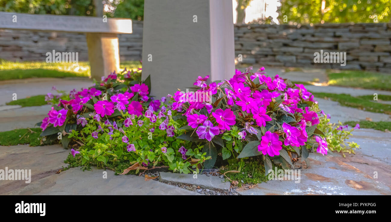 Fence Post Flowers Stock Photos Fence Post Flowers Stock Images