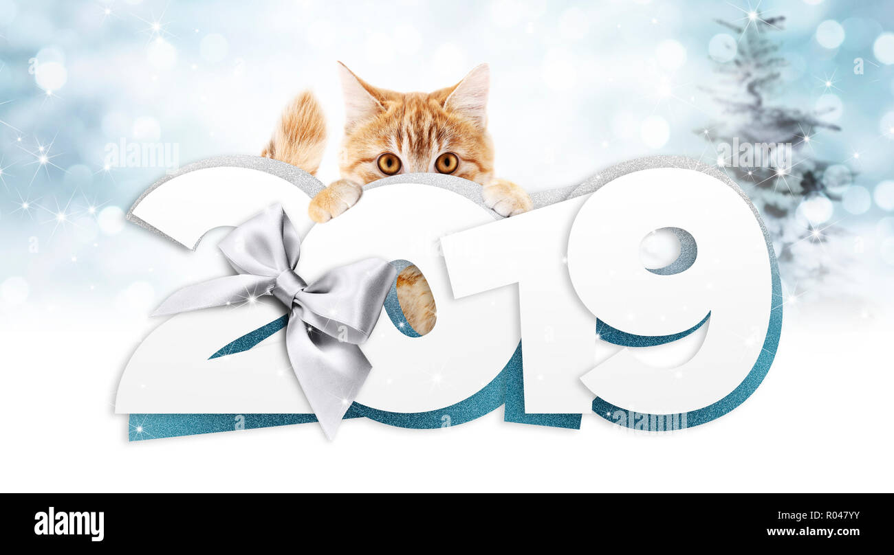 Ginger Cat Showing Happy New Year 2019 Text With Silver