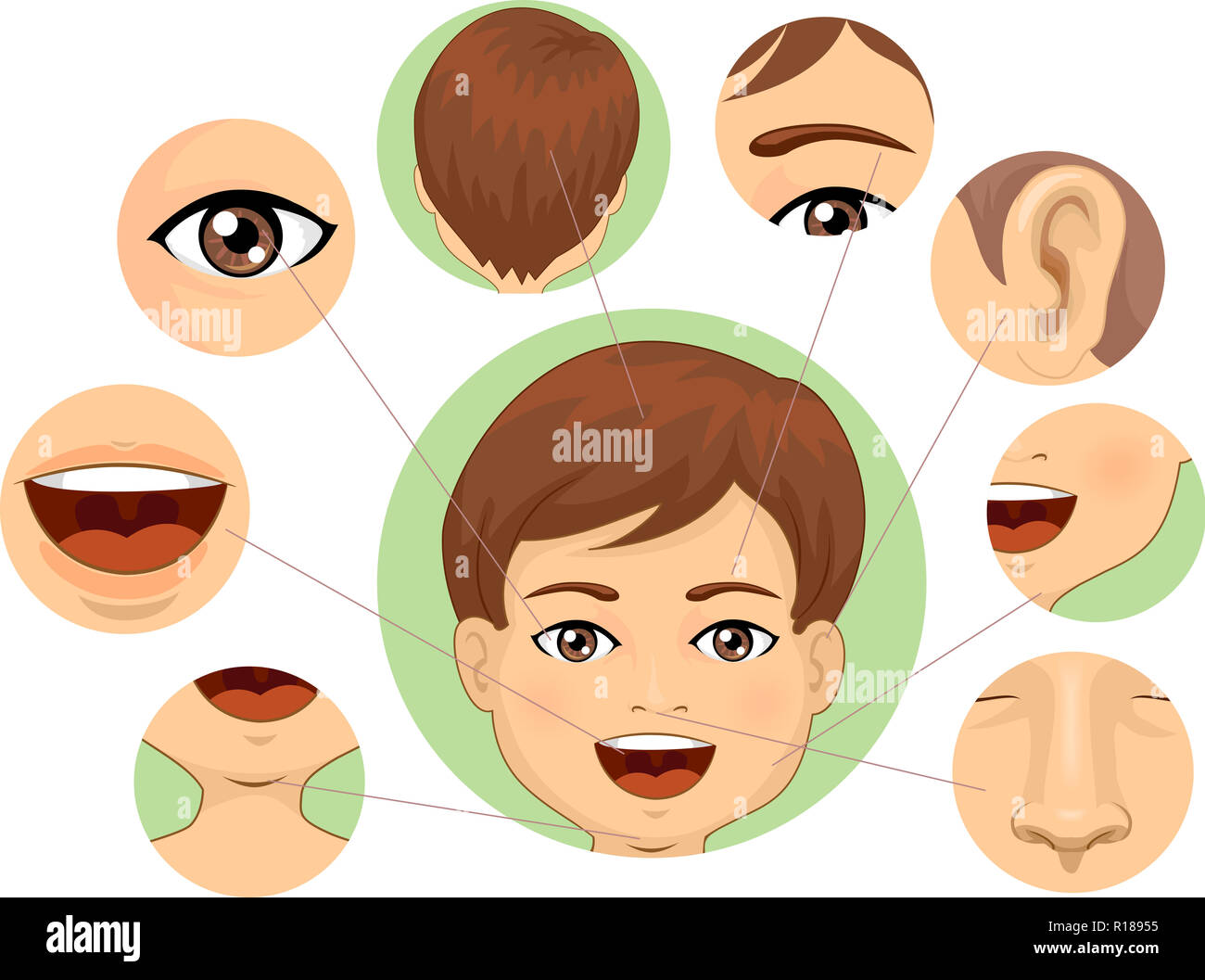 Illustration Of A Kid Boy With Different Parts Of The Face