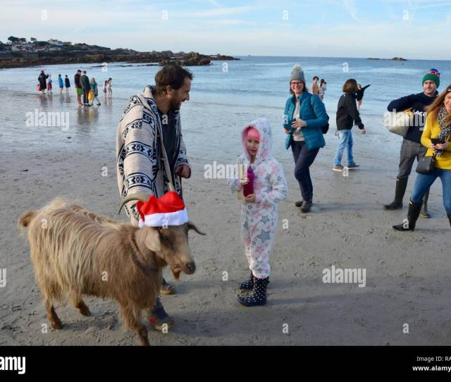 Goat And Owner On Beach At Traditional Boxing Day Swim At Cobo Bay Guernsey