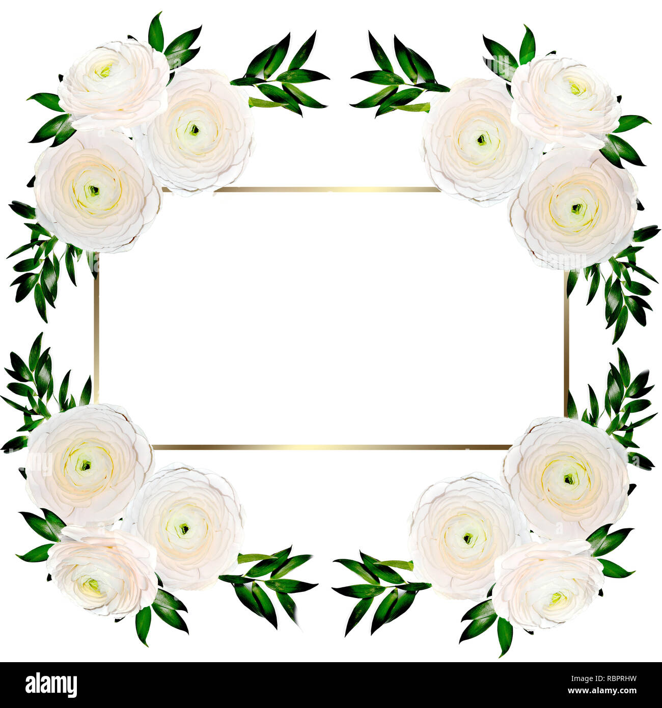 https www alamy com delicate floral frame with creamy colored ranunculus flowers isolated on white design for wedding invitation or greeting card to birthday or other ho image230997477 html
