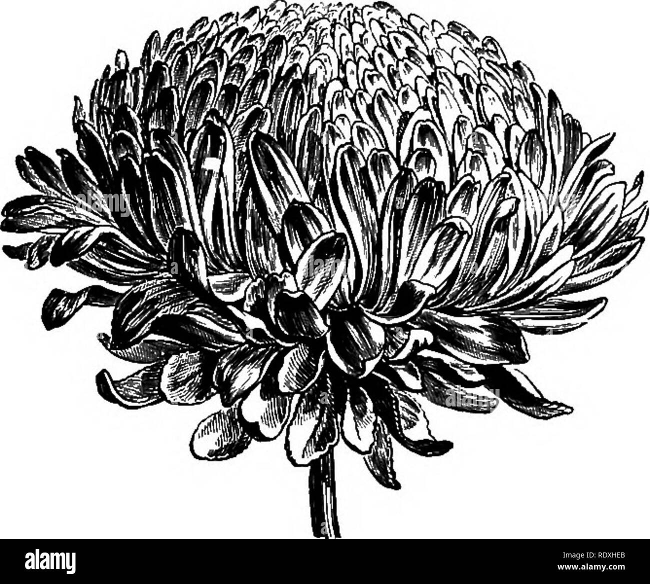 Form Filling Black And White Stock Photos Images Alamy