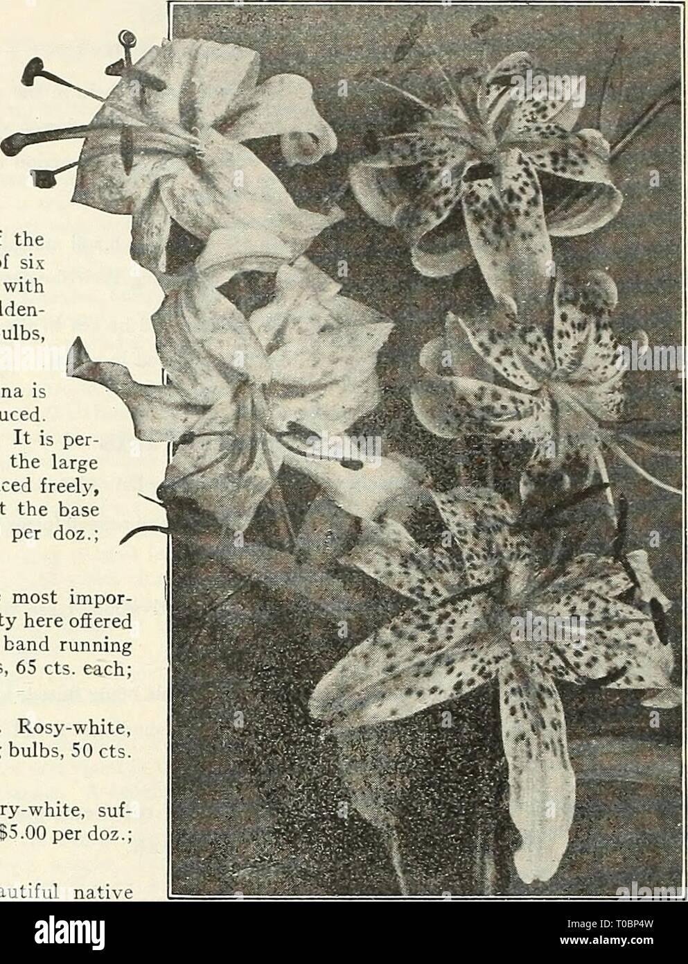 Dreer S Garden Book 1929 1929 Dreer S Garden Book 1929
