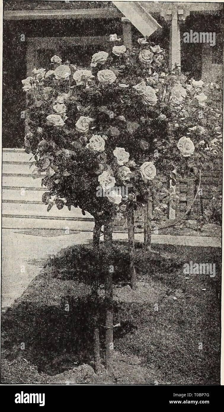Dreer S Garden Book 1917 1917 Dreer S Garden Book 1917