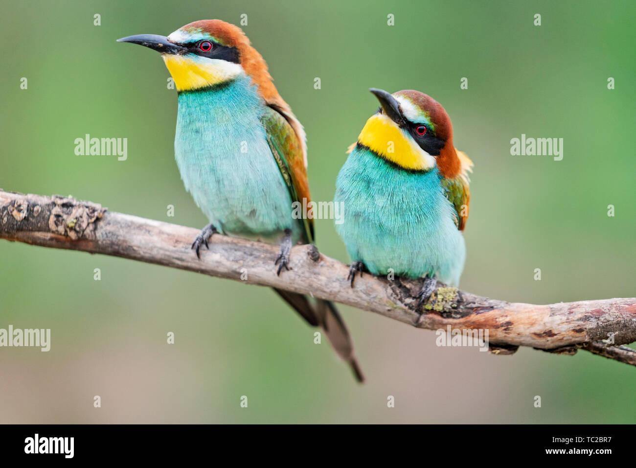 Pair Of Bright Cute Birds Sitting Near Stock Photo Alamy