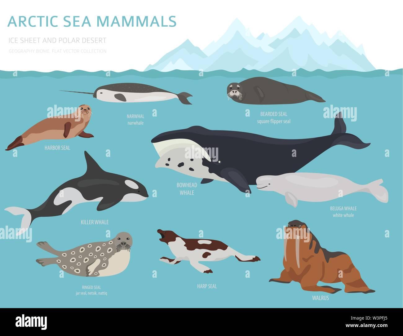 Marine Ecosystem Stock Vector Images