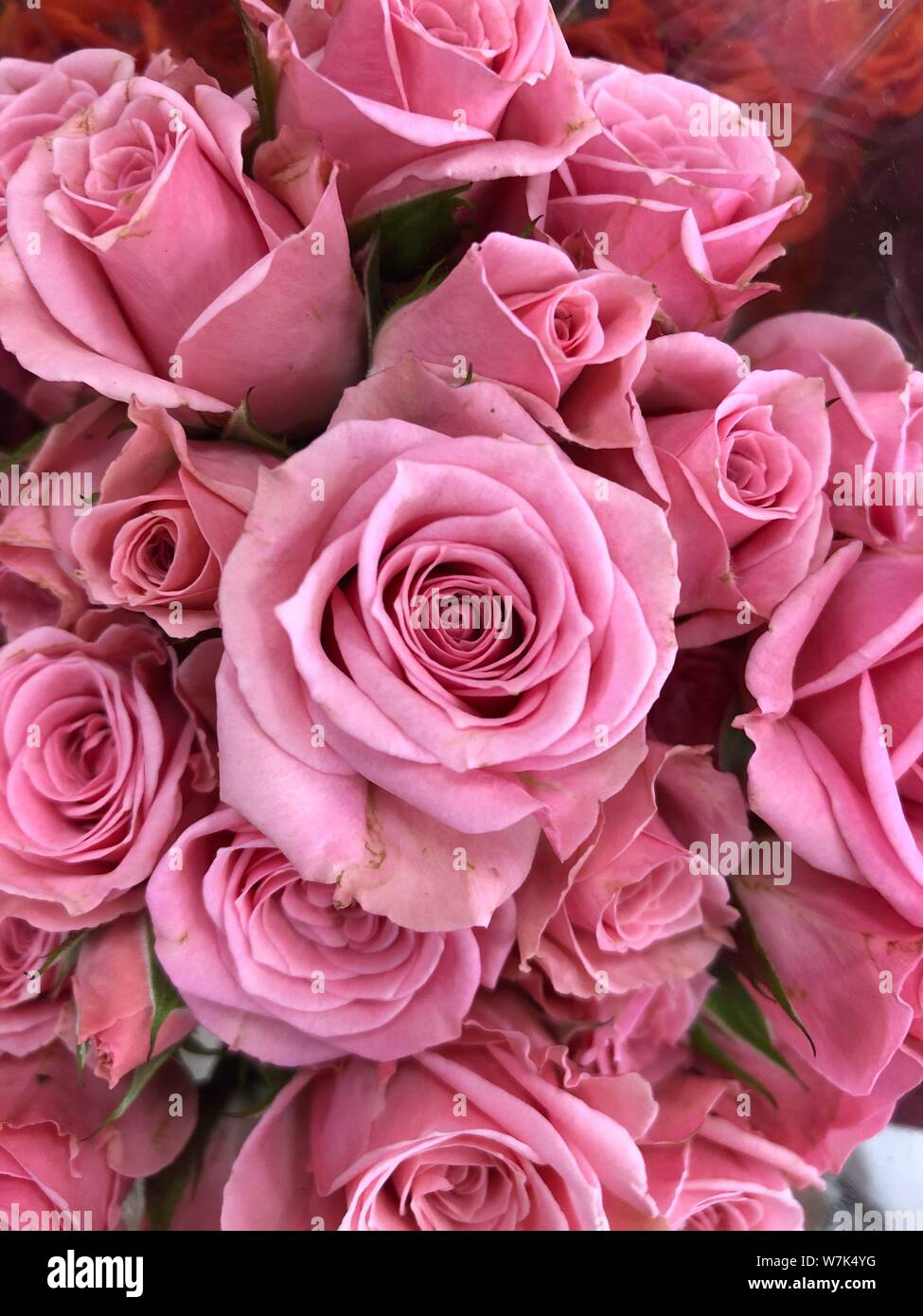 Pink Roses Background Beautiful Flowers Wallpaper Crop Image For Design Stock Photo Alamy