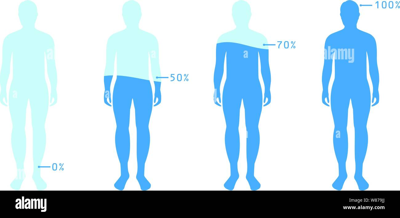 Infographic Showing Water Percentage Level In Human Body Vector Illustration Water Balance Stock Vector Image Art Alamy