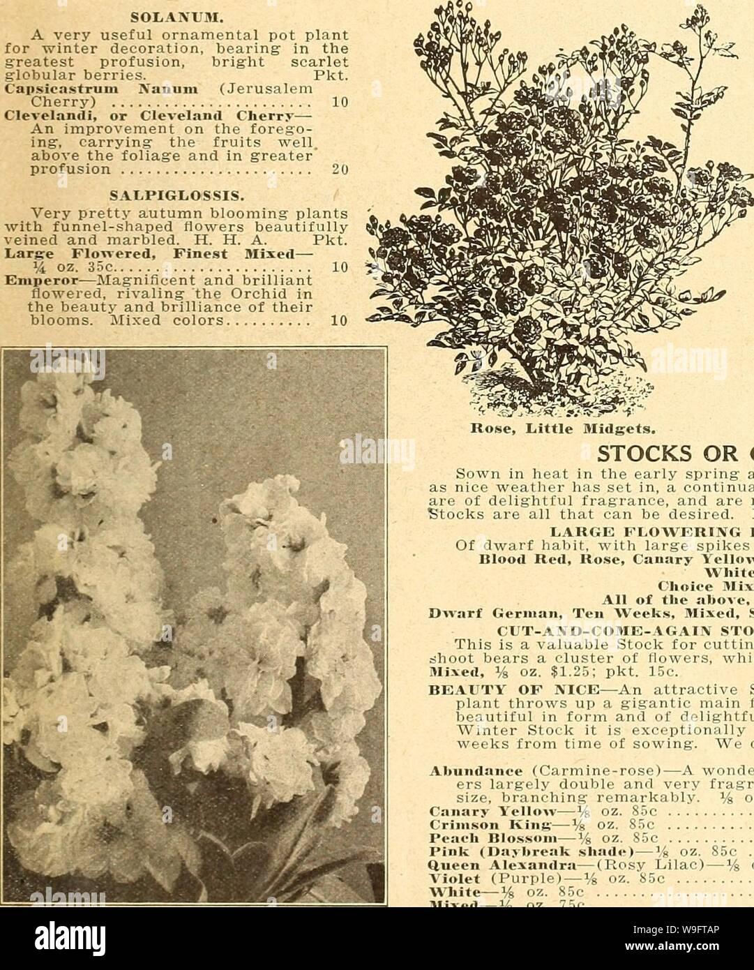 The Little Flower Co Stock Photos The Little Flower Co Stock