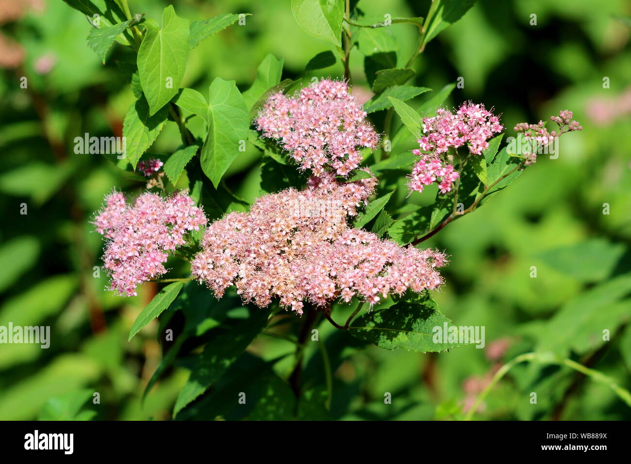 Small Shrub Stock Photos Small Shrub Stock Images Page 3 Alamy