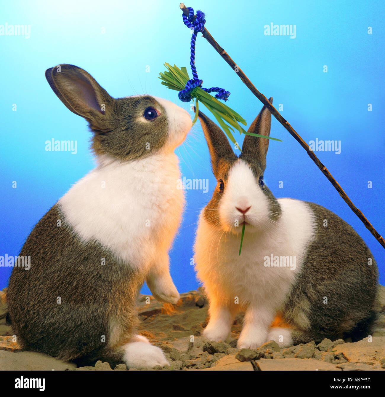 Angeln Fur Kaninchen Witz Spass Humor Witzig Tiere Stockfotografie
