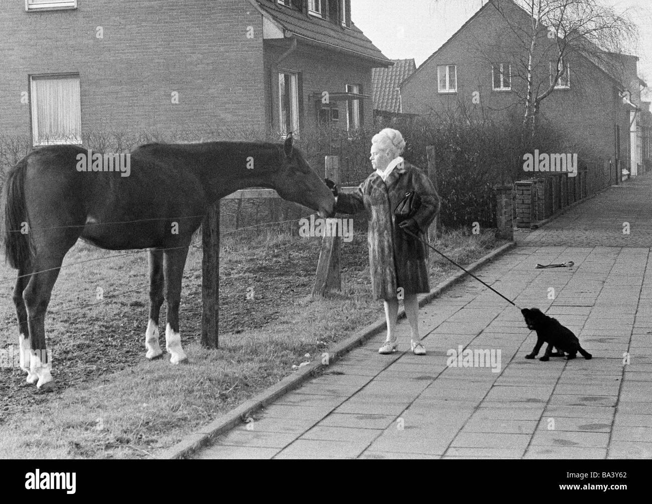 Der Siebziger Jahre Schwarz Weiss Foto Humor Tiere Frau Geht