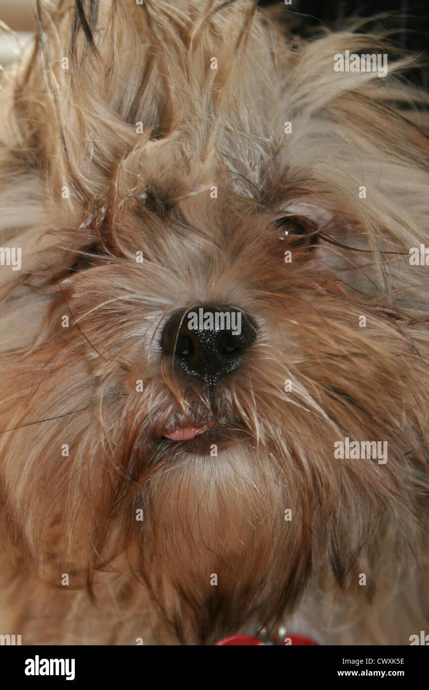 Lustige Hunde Die Ihre Hecks Lustige Tier Zusammenstellung