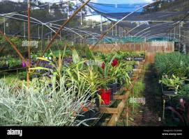 Gewächshaus Pflanzen Gartencenter in der Nähe von Terrey ...