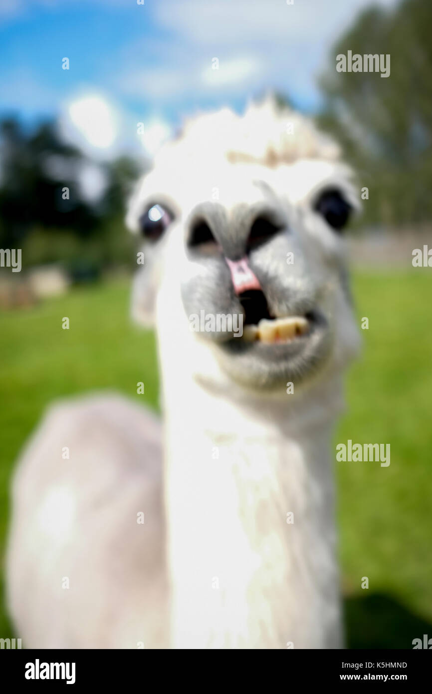 Suss Ist Nicht Genug Lustige Tiere Zum Totlachen 24 Youtube