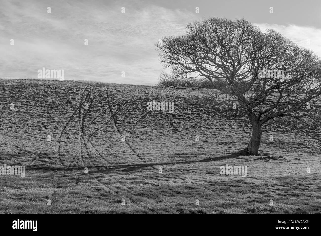 Schwarz Weiß Bild Umwandlung Von Farbe Einer Isolierten