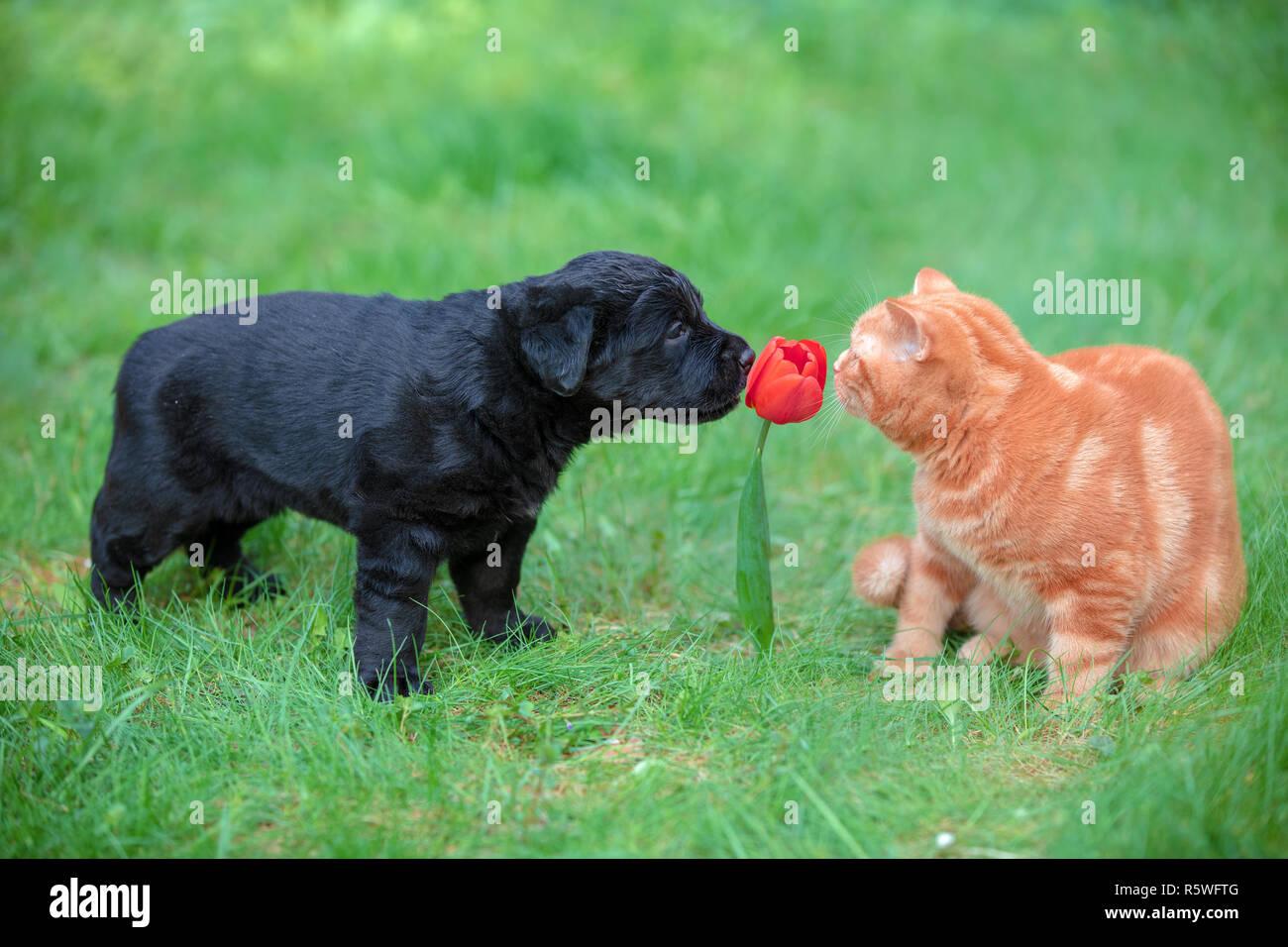 Ein Schmutziger Hund Ist Ein Glucklicher Hund Gluckliche