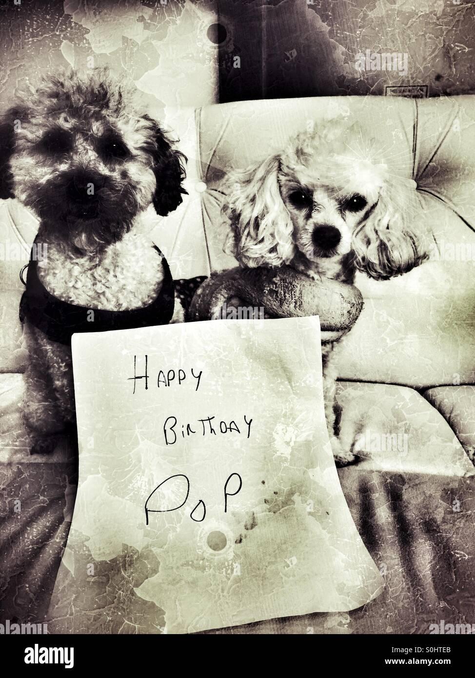 Wunsche Zum Geburtstag Alles Gute Mit Torte Und Hund