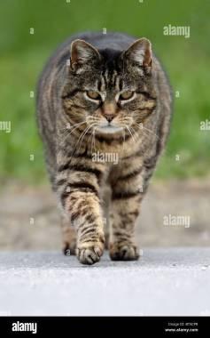 Resultado de imagen de gatos andando