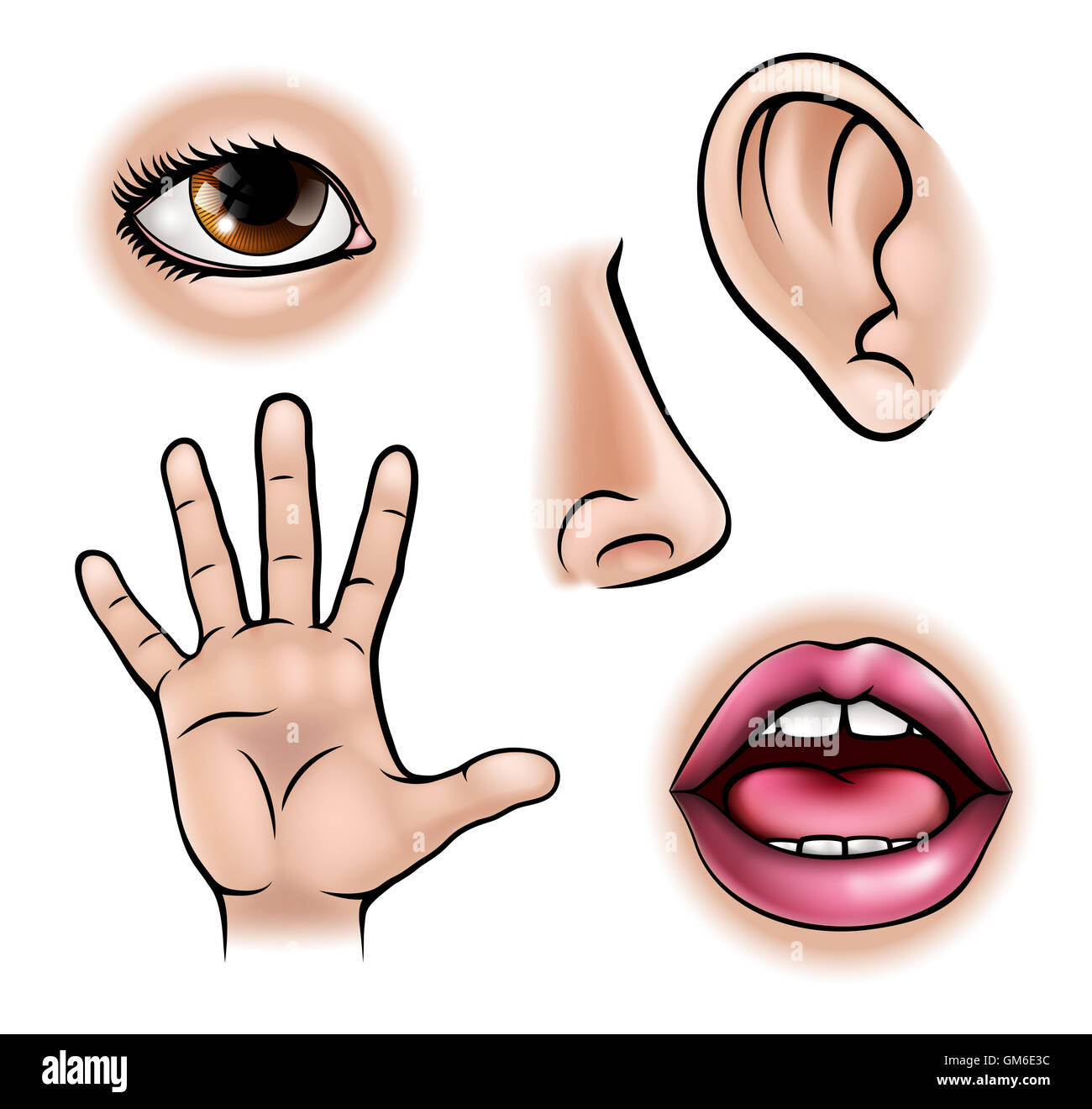 Five Senses Illustration Imagenes De Stock Amp Five Senses