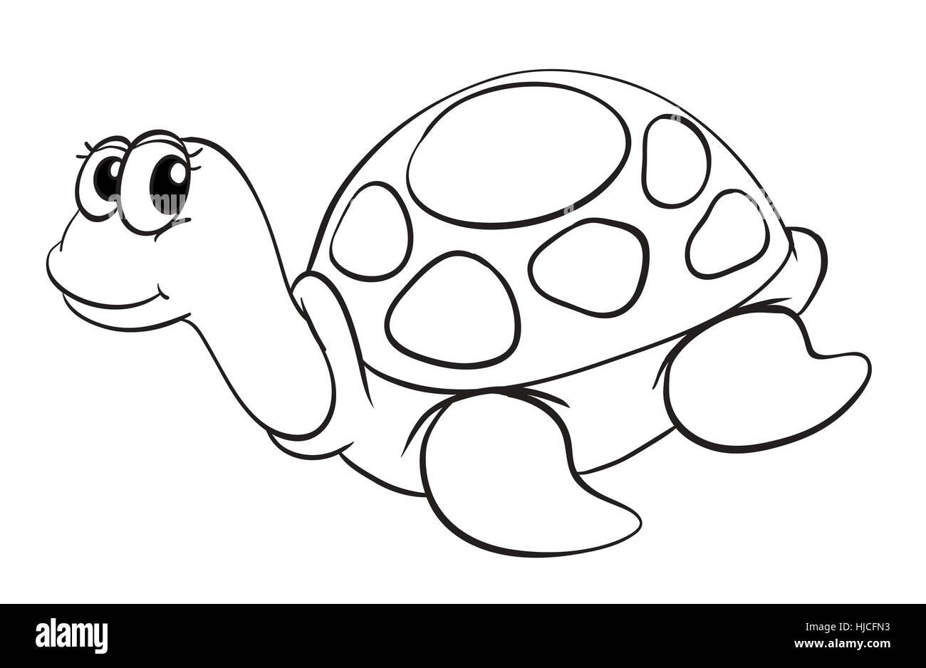 https www alamyimages fr photo image illustration d un dessin de tortue sur fond blanc 131812159 html