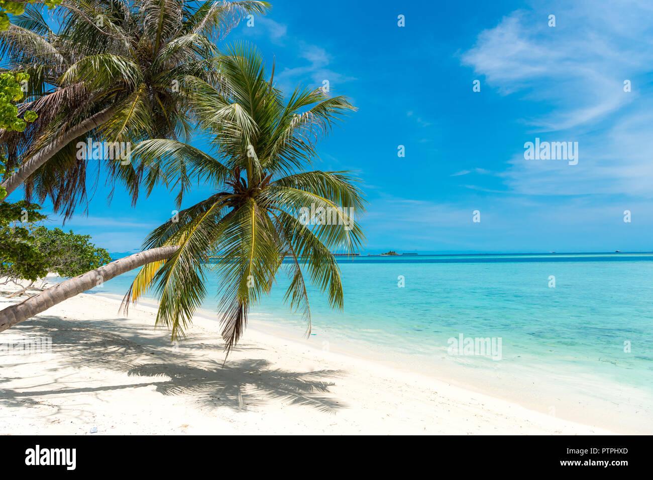 https www alamyimages fr maldives plage palmier cocotier sur la plage de sable blanc dans les maldives paradis tropical island plus belles plages dans le monde image221773173 html